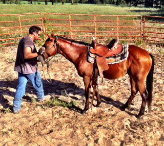 cutting mare for sale